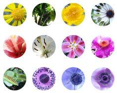 Digital Collage Sheet of Original Flower Photos by behressentials, $1.25
