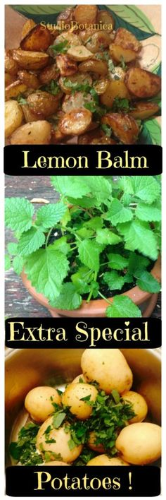 TRY THIS! Easy + Delicious! Extra Special Potatoes with Lemon Balm! - See the recipe '2 ways'  @ Studio Botanica