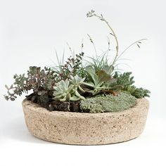 Low Profile Hypertufa Planter, No. 3 in Garden+Outdoor GARDEN Planters Outdoor at Terrain