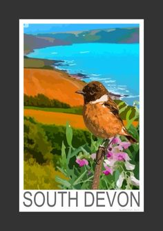 Stonechat at Wembury, Devon (Art Print).