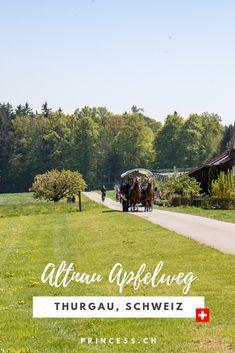 AUSFLUGSTIPP THURGAU: Die Bluescht-Saison im Thurgau bedeutet ein Meer an Blüten. Denn hier wird ein Grossteil des Schweizer Obst angebaut. Apfel, Kirsch, Birnen u.v.m.  Tipps für die Region: der Apfelweg in Altnau, das Bluescht-Fest oder eine Übernachtung im Bubble-Hotel. Bubble, Movie Posters, Movies, Travel, Pony Rides, Pears, Swiss Guard, Families, Travel Inspiration