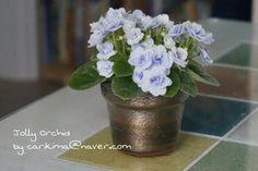African Violet miniature - Jolly Orchid  #Africanviolet #Jolly_Orchid Saintpaulia, African Violet, Violets, Orchids, Miniatures, Plants, Blue, Decor, Flowers