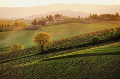 Tuscan Vinyards Photograph by John and Tina Reid - Tuscan Vinyards Fine Art Prints and Posters for Sale