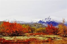 Fall scenery from Oppdal in Norway