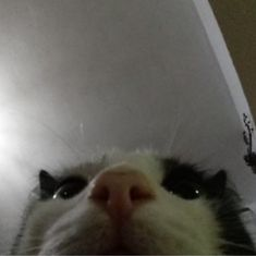 Funny Cute Cats, Funny Cat Memes, Cool Cats, Cute Little Animals, Baby Animals, Funny Animals, Cat Icon, Cat Aesthetic, Crazy Cats