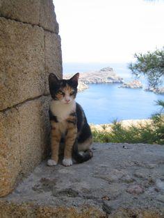 Kočky Rhodoské - Kočky - Galerie