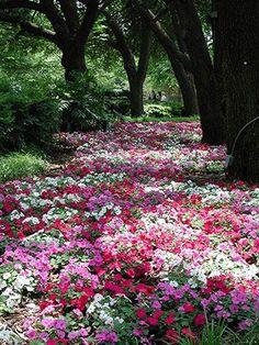Создаем красивый дизайн сада своими руками: 10 главных секретов