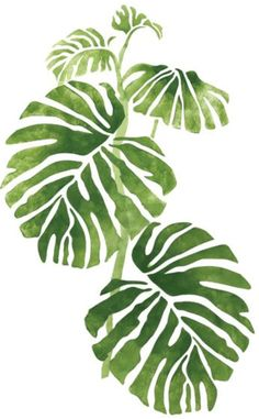 Stencil wall: Grow Philodendron in front: White trellis