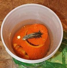 you scoop out and carve your pumpkin, dip it in a large container of bleach and water (use a 1 gal mix). The bleach will kill bacteria and help your pumpkin stay fresh longer. Once completely dry, (drain upside down), add 2 tablespoon of vinegar and Theme Halloween, Holidays Halloween, Halloween Pumpkins, Fall Halloween, Halloween Crafts, Holiday Crafts, Holiday Fun, Happy Halloween, Halloween Decorations