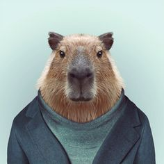 Zoo Portraits - Capybara  Fun, beautiful art and a unique gift idea!
