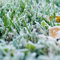 Predicting Frost: how to predict from clues
