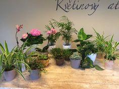 Indoor plants by ROSMARINO / Pokojové rostliny do kanceláří