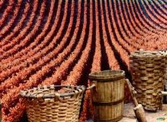 Have you ever seen a traditional Argentine festival? Witness La Vendimia Mendoza Wine Festival, from wine to guachos. From February of March, Festivals Around The World, Places Around The World, Around The Worlds, Mendoza Wine, Wine Vineyards, 8th Of March, February, Wine Festival, Festivals