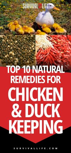Top 10 Natural Remedies for Chicken and Duck Keeping