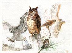 Owls!  Eulen in German. #animal #illustration #watercolor