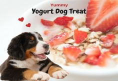 Homemade Dog Food Recipes For Staffies