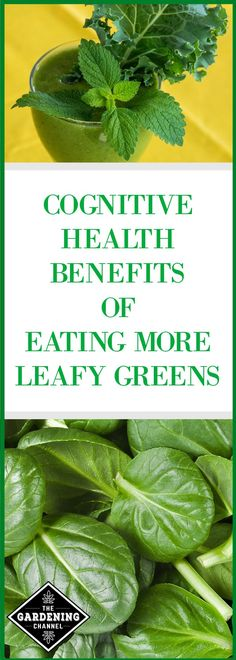 health articles Are you worried about losing your mental edge as you get older One solution might be increasing your leafy greens to benefit your cognitive health. Smoothies For Kids, Fruit Smoothies, Health And Nutrition, Health And Wellness, Health Super, Healthy Snacks, Healthy Eating, Healthy Fruits, Dressing For Fruit Salad