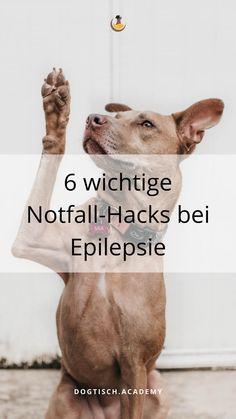 Bei jedem Besitzer ist der Schock sicher groß, wenn der Hund plötzlich von Krämpfen geschüttelt wird und nicht mehr ansprechbar auf der Seite liegt. Hol dir deshalb die wertvollen Tipps und Tricks zum Thema Epilepsie, wie du diese erkennst, vorbeugst und behandelst. #Hund #EpilepsiebeimHund #dogtischacademy Englisch Springer Spaniel, Labrador, Dogs, Movies, Movie Posters, Becoming A Veterinarian, Dog Food, Pooch Workout, Health And Fitness