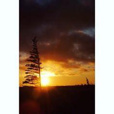 Manitoba sundown - Canada: LCSLB Travel weekend   instagram.com/lechatblog  ciel, nuage, soleil, arbre et plein air