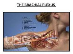 brachial plexus thoracic outlet syndrome neck pain Orlando