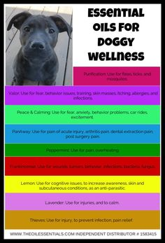 Young Living Essential Oils for Doggy Wellness! Click through the post to see dilution ratios based on the weight of the dog. :) www.fb.com/HealingLotusAromatherapy
