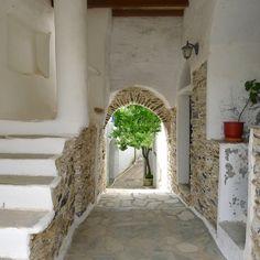 Tinos island, Cyclades, Greece ph.no164, 13.02.2016 | tree in the village