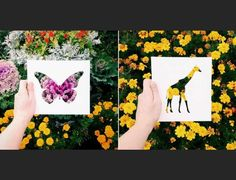 Nikolai Tolstyh - Silhouettes of animals made even better after they're colored in by nature Silhouettes, Wellness, Nature, Photography, Animals, Color, Art, Art Background, Naturaleza