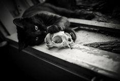 cat Black and White MY EDIT skull Macabre Black Cat cat skull