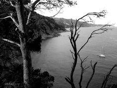 silenciosa despedida, via Flickr.