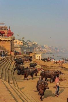 Varanasi: Down the Gath Largest Countries, Countries Of The World, India Food Culture, Places To Travel, Places To See, Brahmaputra River, India Images, Indian River, Scenery Wallpaper