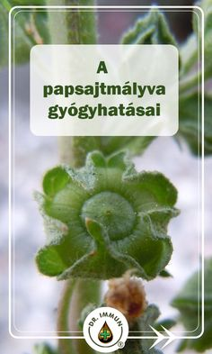 Self Esteem Affirmations, Positive Affirmations, Health 2020, Health And Nutrition, Positive Thoughts, Life Is Good, Herbalism, Herbs, Garden