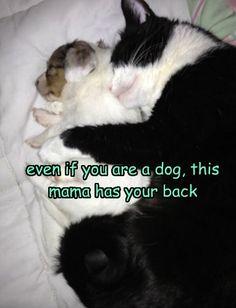 LOLcats is the best place to find and submit funny cat memes and other silly cat materials to share with the world. We find the funny cats that make you LOL so that you don't have to. Funny Cat Jokes, Funny Cats And Dogs, Cat Memes, Funny Kittens, Adorable Kittens, Funny Animal Jokes, Funny Animal Pictures, Cute Funny Animals, Funny Pics