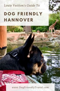 Where to stay, eat & play with your dog in Hannover. #dogfriendly #dogsallowed #travelwithdogs #reisenmithund #hannover #germany Dog Classes, Great Places To Travel, Dog Training Books, Pet Friendly Accommodation, Camping Spots, Pet Travel, Medium Dogs, Dog Friends, Dog Owners