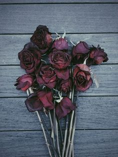 Dark, flowers, hipster, photography, rose, roses, vintage