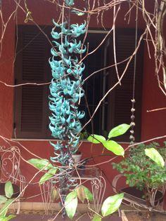 Flor de jade