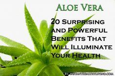 Aloe Vera – 20 Surprising and Powerful Benefits That Will Illuminate Your Health