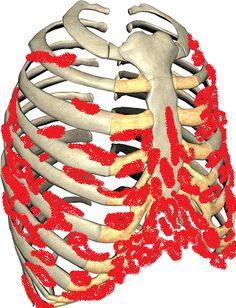 painful lump where ribs meet