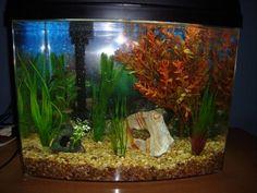betta tank set ups Betta Tank, Betta Fish, Fish Tank, Yahoo Answers, Halfmoon Betta, Live Plants, Things To Come, Ideas, Fishbowl