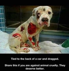 I am constantly amazed at the human capacity for cruelty. It's scary and disgusting.