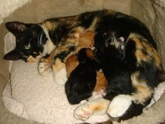 1 Day Old Kittens Tired of your cats spraying? Click here to learn how to put a stop to it.