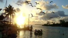 Bar Caye Caulker Belize
