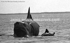 JAWS - Rare Photos, Frame Grabs, Images, Behind-The-Scenes Pics, etc... in '70s Horror and Sci-Fi Forum