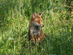 awenphotos.uk - Glasgow Urban Wildlife