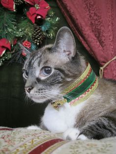 Merry Christmas from His Majesty King Valdemar & Emperor. HM Is the eldest and only surviving son of Her late Majesty Queen Alleria. He ascended to the throne in 2008. He is the second longest reigning Monarch of the Catsford Dynasty, second to his mother. His successor is HRH Crown Princess Allonwyn, Princess Imperial.