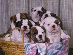 Basket full of cuteness!