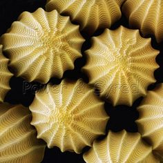 Butterfly eggs. Coloured scanning electron micrograph (SEM) of eggs of the large white (cabbage white) butterfly Pieris brassicae.