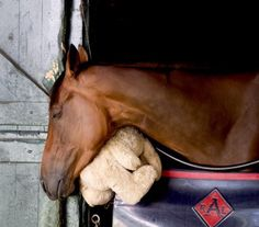 Miss Keller, winner of the Grade I. E. P. Taylor at Woodbine, relaxes in her stall with her beloved stuffed bunny rabbit.
