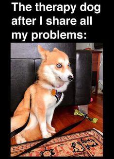 So manche Lehrer, die sic - Humor Lustiger Funny Animal Jokes, Funny Dog Memes, Really Funny Memes, Cute Funny Animals, Funny Animal Pictures, Stupid Funny Memes, Funny Relatable Memes, Animal Memes, Funny Dogs