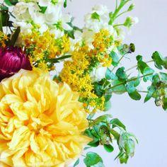 Instagram Roses, Bloom, Flowers, Plants, Flora, Royal Icing Flowers, Floral, Plant, Florals