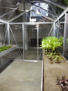 Wang 6 Plants, Plant, Planting, Planets